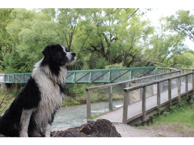 J1 My Dog Loving the Arrow River Track Jacinta Ricketts low res