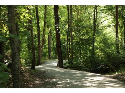 N8 Peaceful Stroll in Nature low res Kelly Coleman 2nd